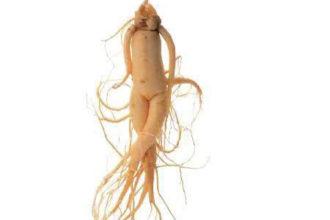 PANAX GINSENG EXTRACTUM (GINSENG ROUGE) Gélules NATURE HEALTH
